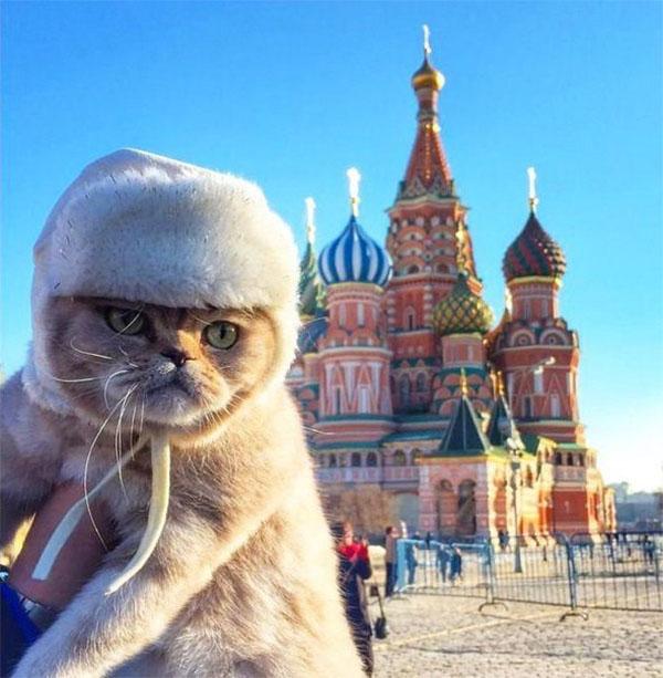 قط في روسيا أمام مبنى الكرملين ومرتدياً لقبعة صوف